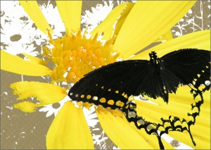 graphic-design-butterfly
