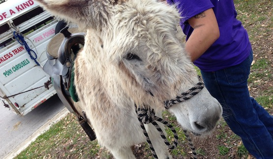 Good Friday Family Event: Lambs and Donkeys